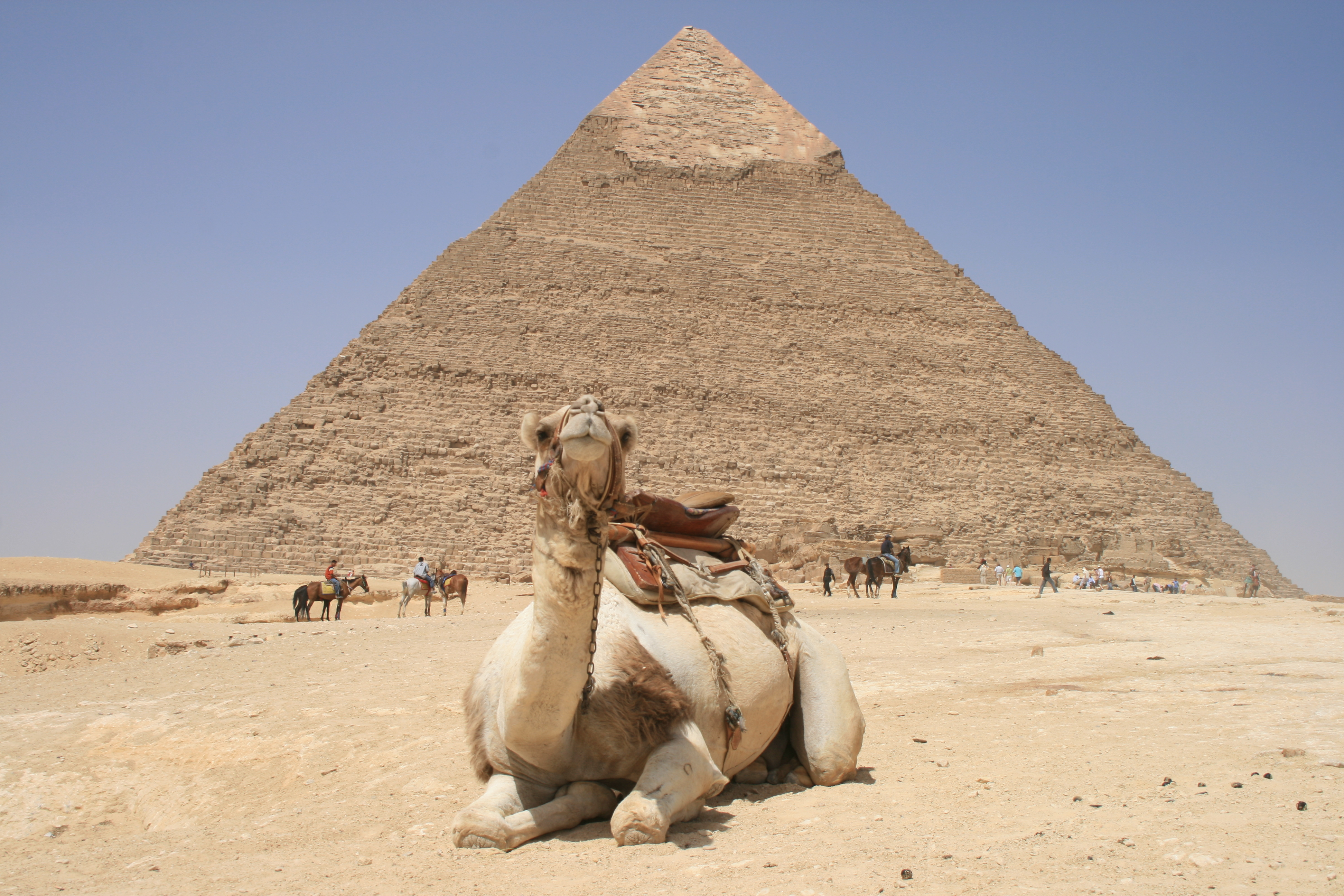 Giza Camel and Pyramid