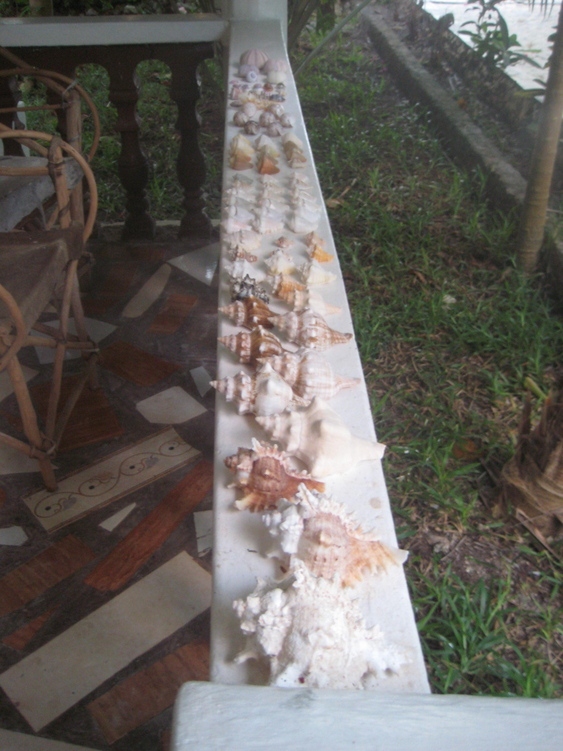 Zanzibar Shells used for the marriage proposal
